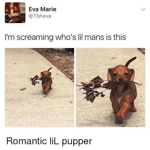 Memes, Eva Marie, and 🤖: Eva Marie  @Tbheva  I'm screaming who's lil mans is this Romantic liL pupper