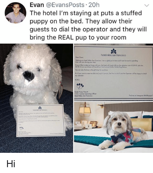 Memes, Hotel, and Puppy: Evan @EvansPosts 20h  The hotel I'm staying at puts a stuffed  puppy on the bed. They allow their  guests to dial the operator and they will  bring the REAL pup to your room  hotelnikko san francisco  Deor Guest  Bosher Pooey P  COO, Conne Operating Offce Hi