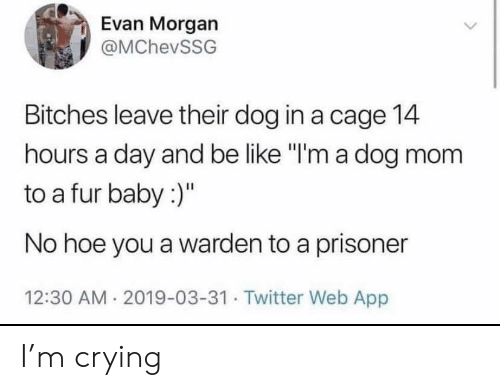 "Be Like, Crying, and Hoe: Evan Morgan  @MChevSSG  Bitches leave their dog in a cage 14  hours a day and be like ""I'm a dog mom  to a fur baby :)""  No hoe you a warden to a prisoner  12:30 AM 2019-03-31. Twitter Web App I'm crying"