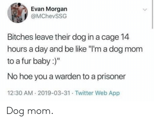 """Be Like, Hoe, and Twitter: Evan Morgan  @MChevSSG  Bitches leave their dog in a cage 14  hours a day and be like """"I'm a dog mom  to a fur baby:  No hoe you a warden to a prisoner  12:30 AM 2019-03-31 Twitter Web App Dog mom."""