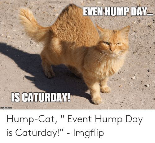 """Caturday Meme: EVEN HUMPDAY  IS CATURDAY! Hump-Cat, """" Event Hump Day is Caturday!"""" - Imgflip"""