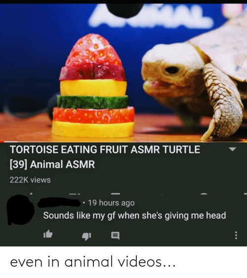 Animal Videos: even in animal videos...