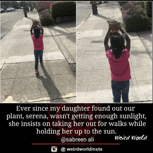 Ali, Memes, and Weird: Ever since my daughter found out ou:r  plant, serena, wasn't getting enough sunlight,  she insists on taking her out for walks while  holding her up to the sun.  @sabreen ali  Weird World  @ weirdworldinsta