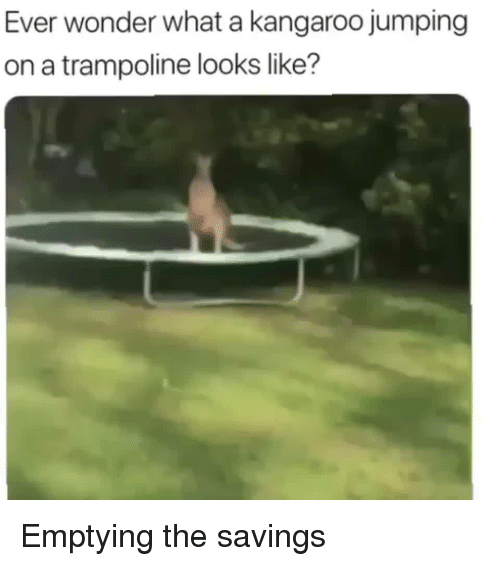 kangaroo: Ever wonder what a kangaroo jumping  on a trampoline looks like? Emptying the savings