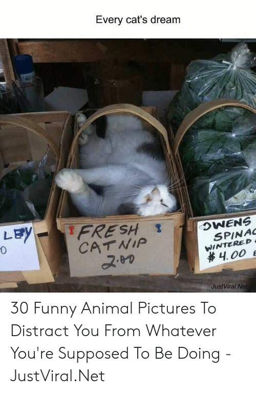 catnip: Every cat's dream  LEY  FRESH  CATNIP  OWENS  SPINAC  WINTERED  4.00 E  JustViral.Net 30 Funny Animal Pictures To Distract You From Whatever You're Supposed To Be Doing - JustViral.Net