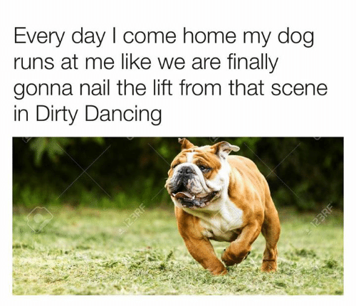 Dancing, Dank, and Dirty: Every day I come home my dog  runs at me like we are finally  gonna nail the lift from that scene  in Dirty Dancing  123RF  123RF
