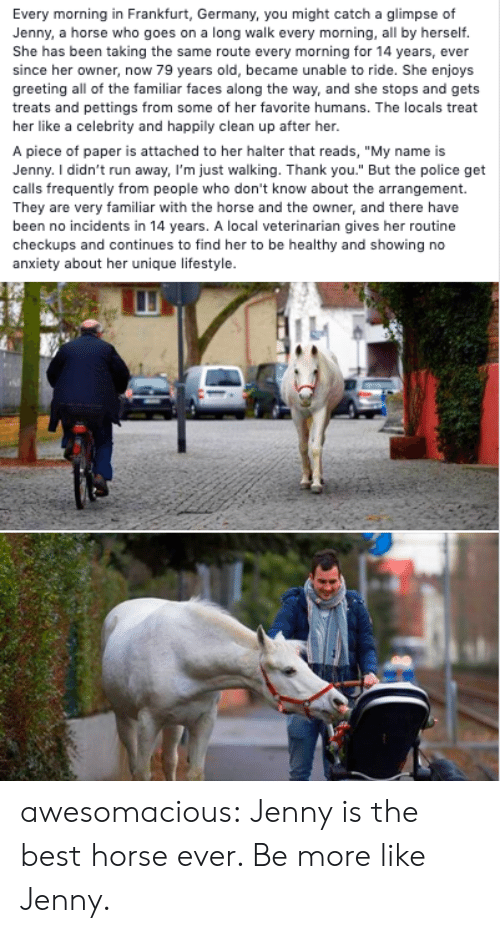 """greeting: Every morning in Frankfurt, Germany, you might catch a glimpse of  Jenny, a horse who goes on a long walk every morning, all by herself.  She has been taking the same route every morning for 14 years, ever  since her owner, now 79 years old, became unable to ride. She enjoys  greeting all of the familiar faces along the way, and she stops and gets  treats and pettings from some of her favorite humans. The locals treat  her like a celebrity and happily clean up after her.  A piece of paper is attached to her halter that reads, """"My name is  Jenny. I didn't run away, I'm just walking. Thank you."""" But the police get  calls frequently from people who don't know about the arrangement.  They are very familiar with the horse and the owner, and there have  been no incidents in 14 years. A local veterinarian gives her routine  checkups and continues to find her to be healthy and showing no  anxiety about her unique lifestyle. awesomacious:  Jenny is the best horse ever. Be more like Jenny."""
