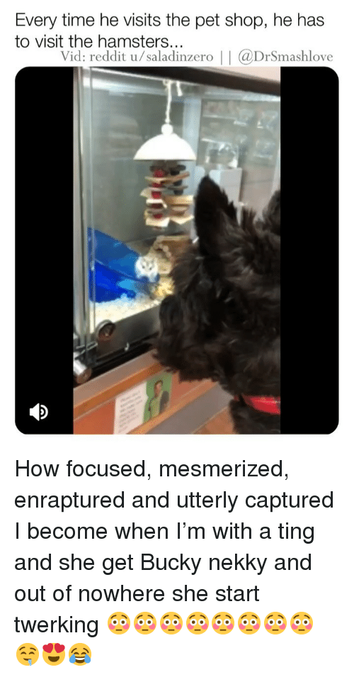 mesmerized: Every time he visits the pet shop, he has  to visit the hamsters...  Vid: reddit u/saladinzero | | aDrSmashlove How focused, mesmerized, enraptured and utterly captured I become when I'm with a ting and she get Bucky nekky and out of nowhere she start twerking 😳😳😳😳😳😳😳😳🤤😍😂