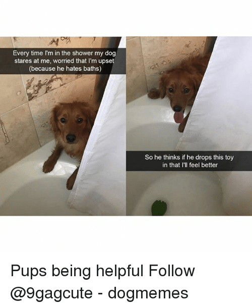 Memes, Shower, and Time: Every time I'm in the shower my dog  stares at me, worried that I'm upset  (because he hates baths)  So he thinks if he drops this toy  in that I'll feel better Pups being helpful Follow @9gagcute - dogmemes