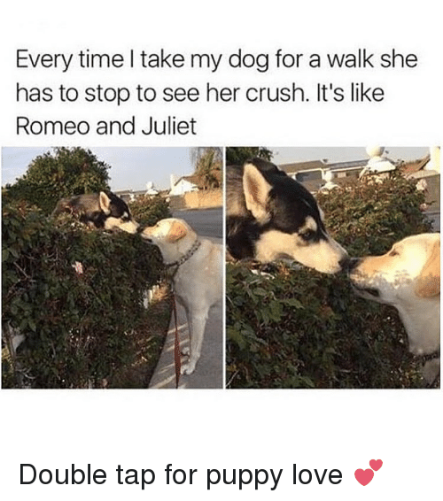 puppies love: Every time take my dog for a walk she  has to stop to see her crush. It's like  Romeo and Juliet Double tap for puppy love 💕