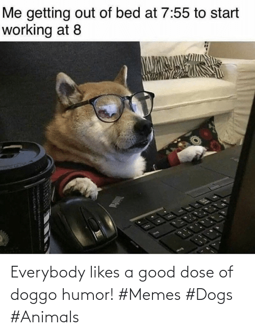 Animals: Everybody likes a good dose of doggo humor! #Memes #Dogs #Animals