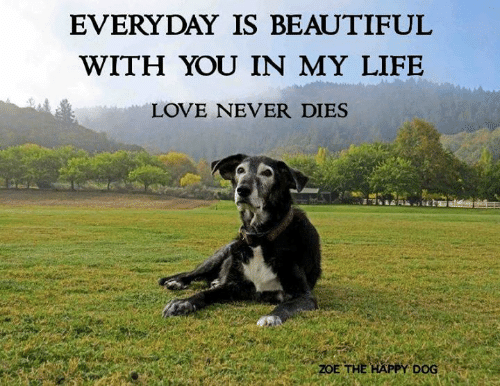 Beautiful, Life, and Love: EVERYDAY IS BEAUTIFUL  WITH YOU IN MY LIFE  LOVE NEVER DIES  ZOE THE HAPPY DOG