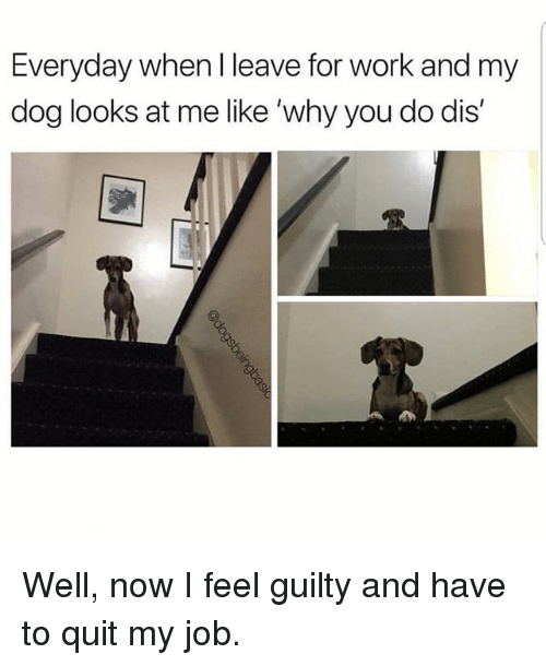 Memes, Work, and 🤖: Everyday when I leave for work and my  dog looks at me like 'why you do dis' Well, now I feel guilty and have to quit my job.