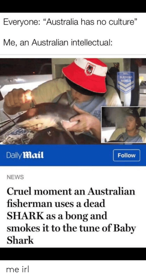 """News, Shark, and Australia: Everyone: """"Australia has no culture""""  Me, an Australian intellectual:  NRL  SLEDGING  REBELS  DailyMail  Follow  NEWS  Cruel moment an Australian  fisherman uses a dead  SHARK as a bong and  smokes it to the tune of Baby  Shark me irl"""