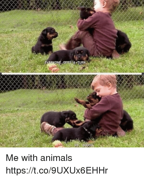 Animals, Girl Memes, and Turn: EVERYONE GETS A TURN  BUDD Me with animals https://t.co/9UXUx6EHHr