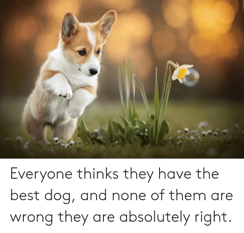 Best, Dog, and Them: Everyone thinks they have the best dog, and none of them are wrong they are absolutely right.