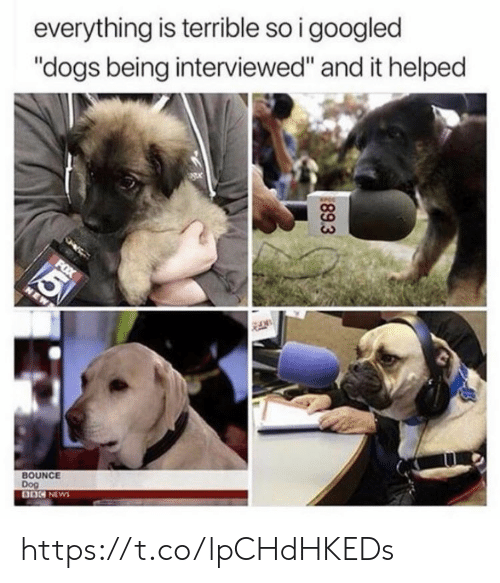 """Dogs, Memes, and News: everything is terrible so i googled  """"dogs being interviewed"""" and it helped  FOX  5  NEW  BOUNCE  Dog  BO NEWS  89.3 https://t.co/lpCHdHKEDs"""