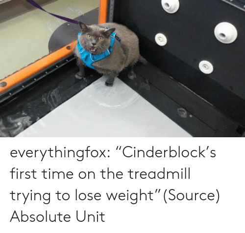 """lose weight: everythingfox:  """"Cinderblock's first time on the treadmill trying to lose weight""""(Source)  Absolute Unit"""