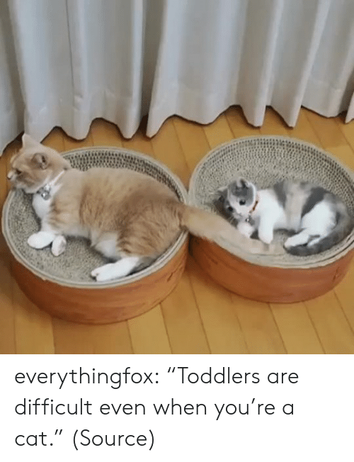 """Www Reddit: everythingfox: """"Toddlers are difficult even when you're a cat."""" (Source)"""
