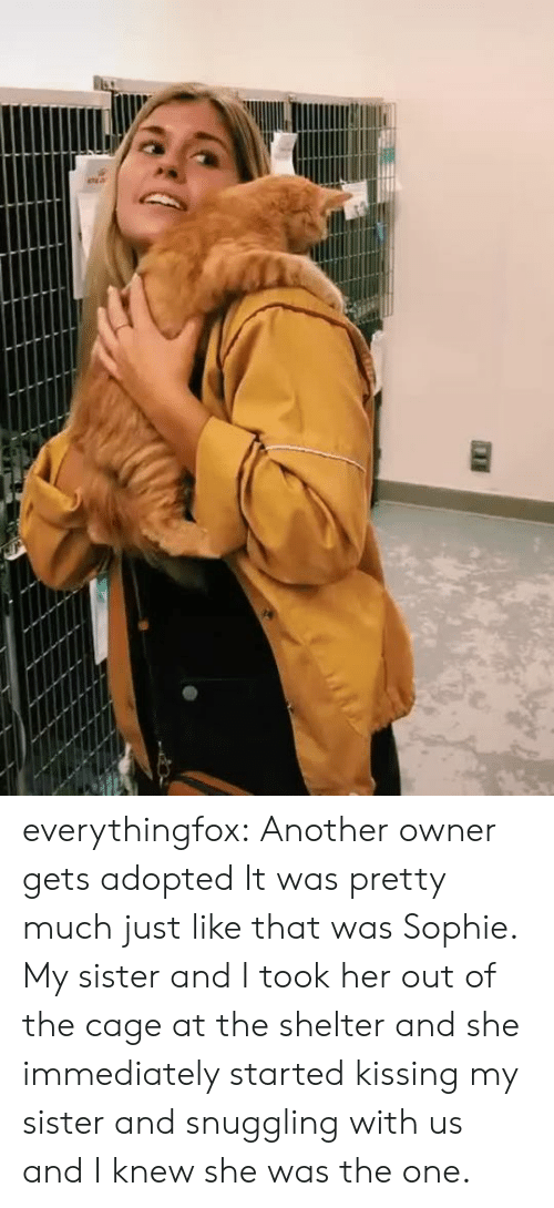 kissing: everythingfox:   Another owner gets adopted  It was pretty much just like that was Sophie. My sister and I took her out of the cage at the shelter and she immediately started kissing my sister and snuggling with us and I knew she was the one.