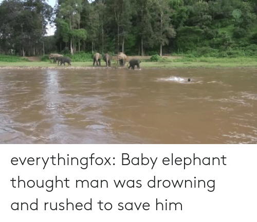Target, Tumblr, and Blog: everythingfox:  Baby elephant thought man was drowning and rushed to save him