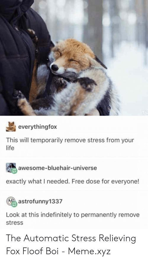 Everythingfox This Will Temporarily Remove Stress From Your Life