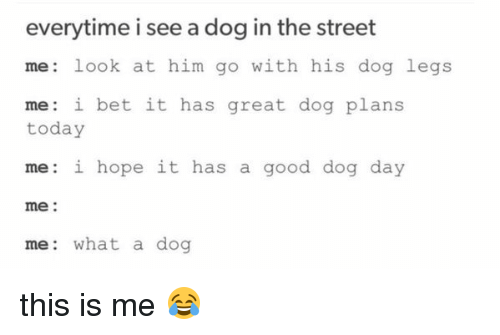 What A Dog