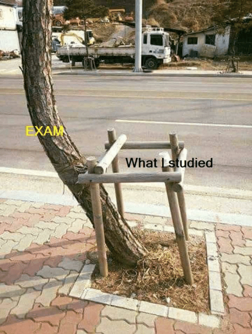 What and Exam: EXAM  What Lstudied