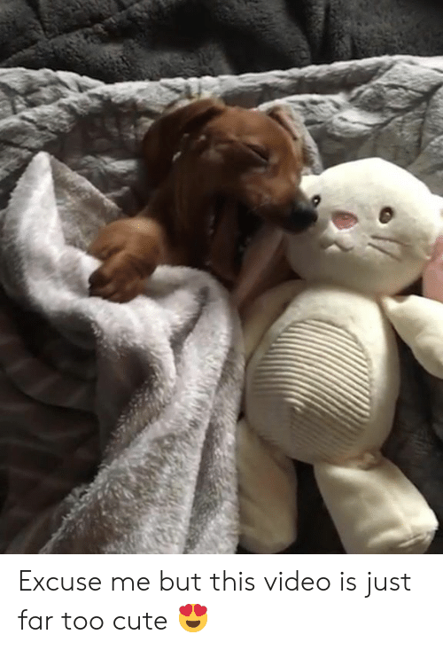 Cute, Video, and Too Cute: Excuse me but this video is just far too cute 😍