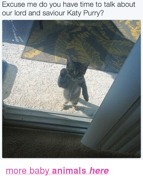 """Lord And Saviour: Excuse me do you have time to talk about  our lord and saviour Katy Purry? <p><a href=""""http://babyanimalgifs.tumblr.com/"""" target=""""_blank"""">more baby <b>animals <i>here</i></b></a></p>"""