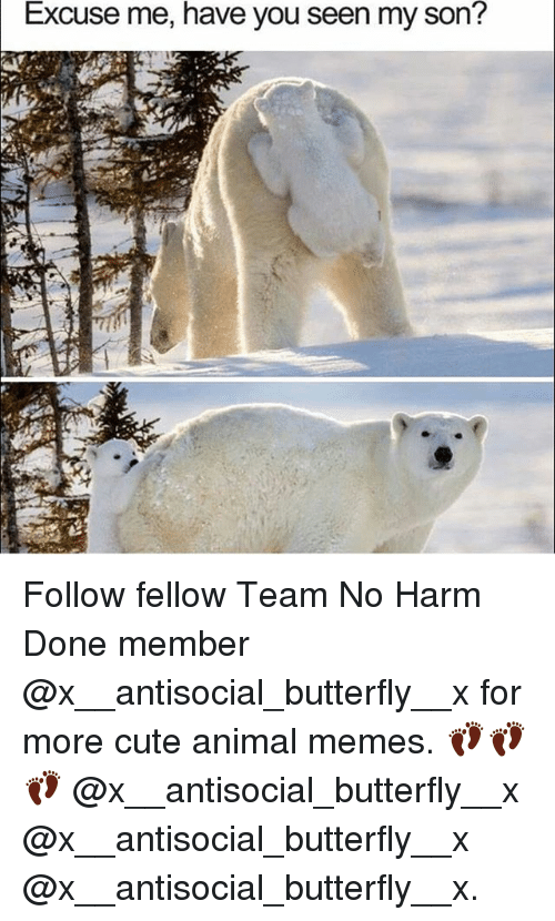 Cute, Memes, and Animal: Excuse me, have you seen my son? Follow fellow Team No Harm Done member @x__antisocial_butterfly__x for more cute animal memes. 👣👣👣 @x__antisocial_butterfly__x @x__antisocial_butterfly__x @x__antisocial_butterfly__x.