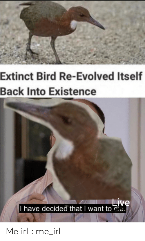 Live, Irl, and Me IRL: Extinct Bird Re-Evolved Itself  Back Into Existence  Live  I have decided that I want toie. Me irl : me_irl
