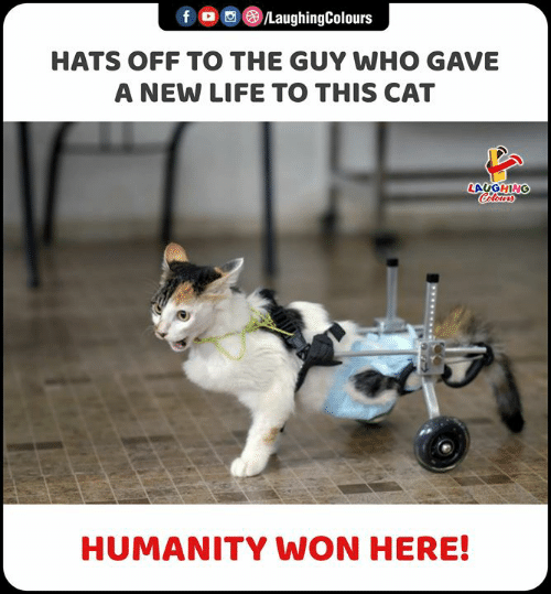 Life, Humanity, and Indianpeoplefacebook: f  LaughingColours  HATS OFF TO THE GUY WHO GAVE  A NEW LIFE TO THIS CAT  LAUGHING  Celours  HUMANITY WON HERE!  www.
