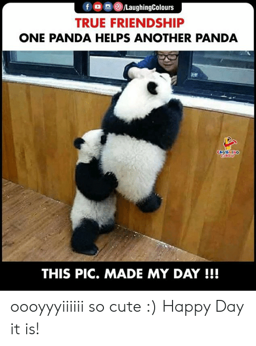 Indianpeoplefacebook: f /LaughingColours  TRUE FRIENDSHIP  ONE PANDA HELPS ANOTHER PANDA  LAUGHING  Clers  THIS PIC. MADE MY DAY !!! oooyyyiiiiii so cute :) Happy Day it is!