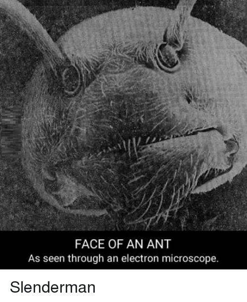 Face Of An Ant As Seen Through An Electron Microscope Slenderman