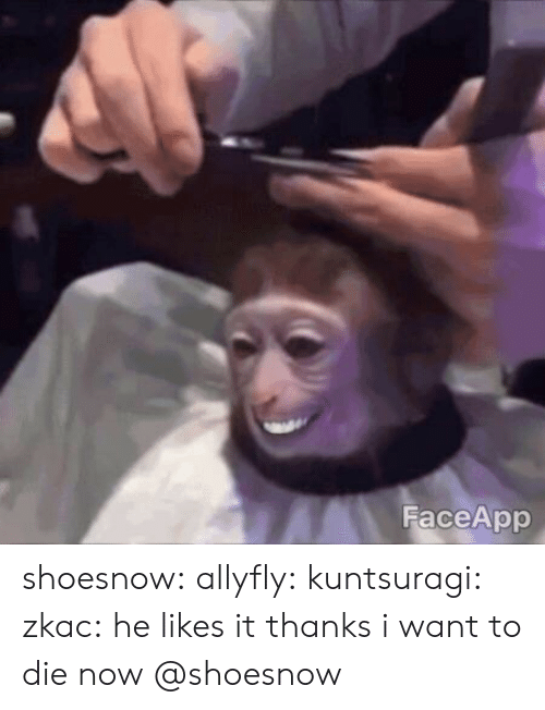 He Likes It: FaceApp shoesnow:  allyfly: kuntsuragi:  zkac: he likes it thanks i want to die now   @shoesnow