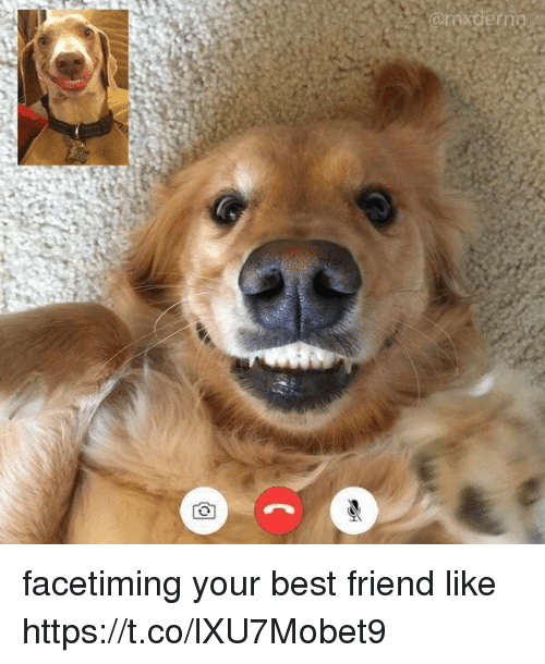 Best Friend, Best, and Girl Memes: facetiming your best friend like https://t.co/lXU7Mobet9