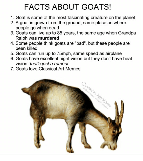 """Bad, Facts, and Love: FACTS ABOUT GOATS!  1. Goat is some of the most fascinating creature on the planet  2. A goat is grown from the ground, same place as where  people go when dead  3. Goats can live up to 85 years, the same age when Grandpa  Ralph was murdered  4. Some people think goats are """"bad"""", but these people are  been killed  5. Goats can run up to 75mph, same speed as airplane  6. Goats have excellent night vision but they don't have heat  vision, that's just a rumour  7. Goats love Classical Art Memes"""
