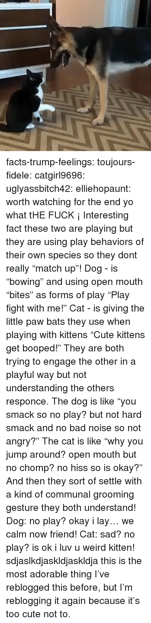 "Bad, Cute, and Facts: facts-trump-feelings:  toujours-fidele:  catgirl9696:  uglyassbitch42:  elliehopaunt: worth watching for the end  yo what tHE FUCK ¡   Interesting fact these two are playing but they are using play behaviors of their own species so they dont really ""match up""! Dog - is ""bowing"" and using open mouth ""bites"" as forms of play  ""Play fight with me!"" Cat - is giving the little paw bats they use when playing with kittens ""Cute kittens get booped!"" They are both trying to engage the other in a playful way but not understanding the others responce. The dog is like ""you smack so no play? but not hard smack and no bad noise so not angry?"" The cat is like ""why you jump around? open mouth but no chomp? no hiss so is okay?"" And then they sort of settle with a kind of communal grooming gesture they both understand! Dog: no play? okay i lay… we calm now friend! Cat: sad? no play? is ok i luv u weird kitten!   sdjaslkdjaskldjaskldja this is the most adorable thing  I've reblogged this before, but I'm reblogging it again because it's too cute not to."