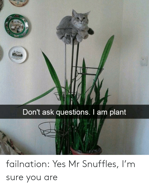 sure: failnation:  Yes Mr Snuffles, I'm sure you are