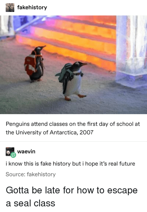 its real: fakehistory  Penguins attend classes on the first day of school at  the University of Antarctica, 2007  waevin  i know this is fake history but i hope it's real future  Source: fakehistory Gotta be late for how to escape a seal class