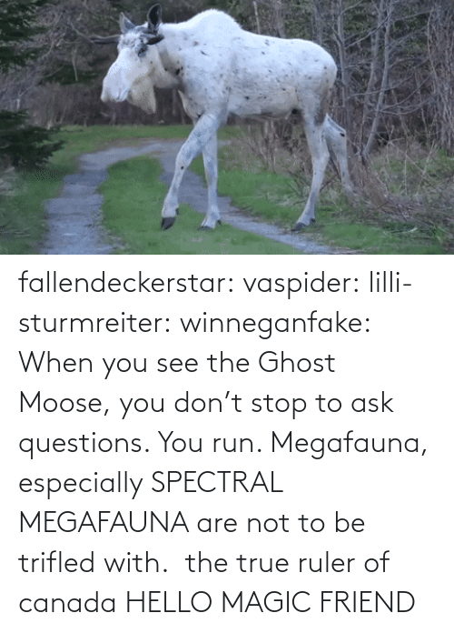 moose: fallendeckerstar: vaspider:  lilli-sturmreiter:  winneganfake: When you see the Ghost Moose, you don't stop to ask questions. You run. Megafauna, especially SPECTRAL MEGAFAUNA are not to be trifled with.  the true ruler of canada  HELLO MAGIC FRIEND