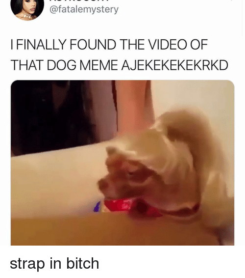 Bitch, Meme, and Memes: @fatalemystery  I FINALLY FOUND THE VIDEO OF  THAT DOG MEME AJEKEKEKEKRKD strap in bitch