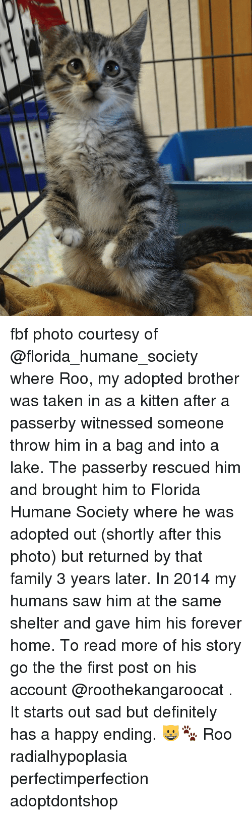 Definitely, Family, and Memes: fbf photo courtesy of @florida_humane_society where Roo, my adopted brother was taken in as a kitten after a passerby witnessed someone throw him in a bag and into a lake. The passerby rescued him and brought him to Florida Humane Society where he was adopted out (shortly after this photo) but returned by that family 3 years later. In 2014 my humans saw him at the same shelter and gave him his forever home. To read more of his story go the the first post on his account @roothekangaroocat . It starts out sad but definitely has a happy ending. 😺🐾 Roo radialhypoplasia perfectimperfection adoptdontshop