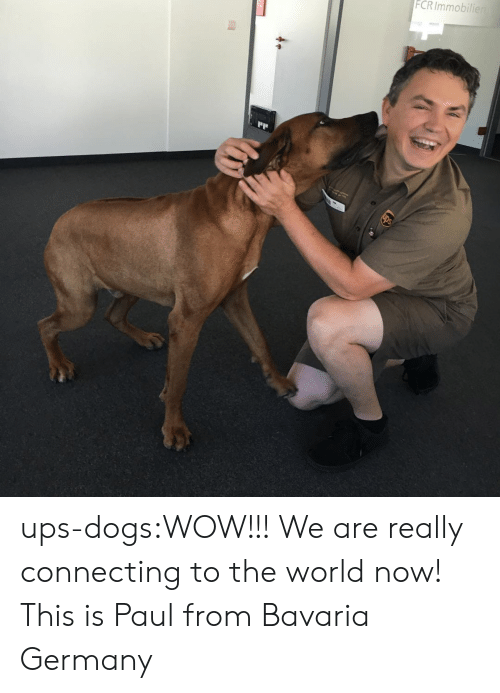 Dogs, Target, and Tumblr: FCRImmobilier ups-dogs:WOW!!! We are really connecting to the world now! This is Paul from Bavaria Germany