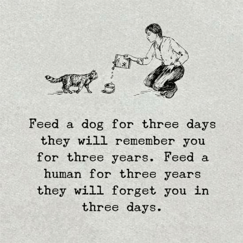 Dog, Human, and Three: Feed a dog for three days  they will remember you  for three years. Feed a  human for three years  they will forget you in  three days.