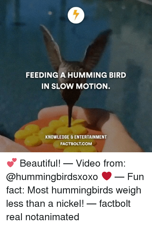 Hummingbirds: FEEDING A HUMMING BIRD  IN SLOW MOTION  KNOWLEDGE & ENTERTAINMENT  FACT BOLT COM 💕 Beautiful! — Video from: @hummingbirdsxoxo ❤️ — Fun fact: Most hummingbirds weigh less than a nickel! — factbolt real notanimated