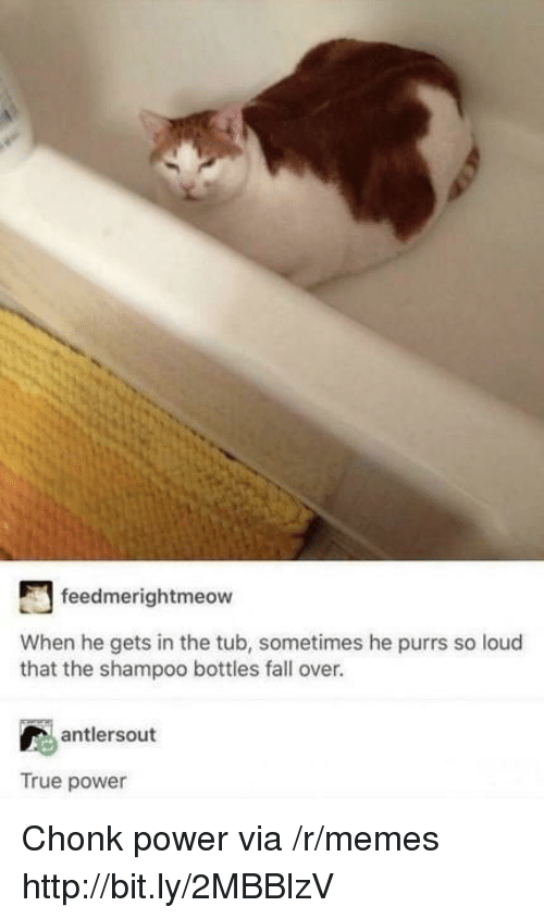 Fall, Memes, and True: feedmerightmeow  When he gets in the tub, sometimes he purrs so loud  that the shampoo bottles fall over.  antlersout  True power Chonk power via /r/memes http://bit.ly/2MBBlzV