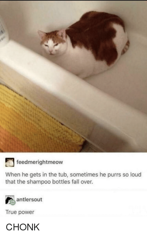 Fall, True, and Power: feedmerightmeow  When he gets in the tub, sometimes he purrs so loud  that the shampoo bottles fall over.  antlersout  True power CHONK