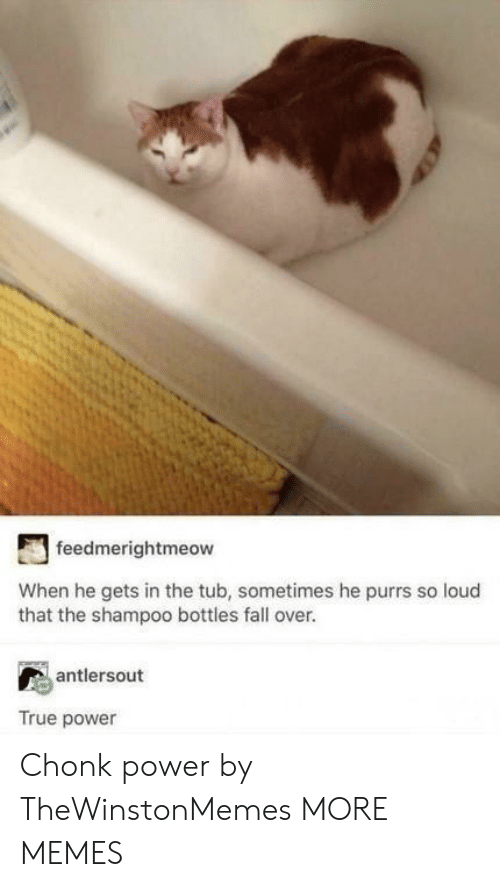 Dank, Fall, and Memes: feedmerightmeow  When he gets in the tub, sometimes he purrs so loud  that the shampoo bottles fall over.  antlersout  True power Chonk power by TheWinstonMemes MORE MEMES
